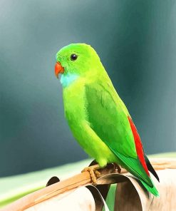 Beautiful Green Parrot NEW paint by number