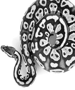 Black and white Royal Python adult paint by numbers