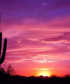 Beautiful Cactus Sunset paint by number