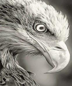 Black and white bald eagle adult paint by numbers