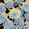 Aesthetic Succulents Paint By Numbers
