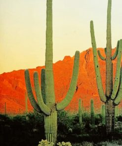 big cactus mountains adult paint by numbers