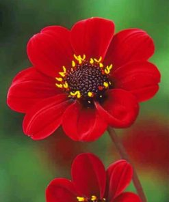 Red Flowers paint by numbers