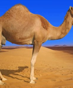 Desert Camel Animal paint by numbers