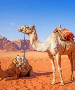 Desert Camel Paint By Numbers