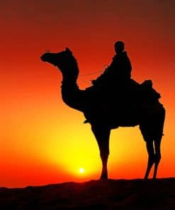 Person Riding A Camel painting By Numbers