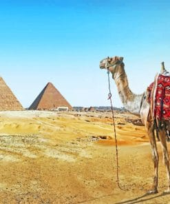 Camel In Egypt paint by numbers