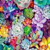 succulents-Plants-paint-by-numbers